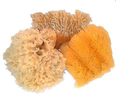 Different sea sponges create different painting effects