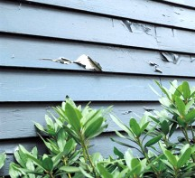 Peeling paint on the siding
