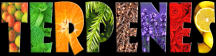 Terpenes are natural VOCs
