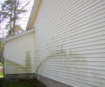 Green mildew growth on the back walls.