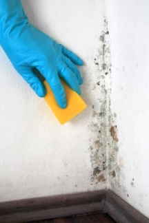 Killing mildew spores with bleach