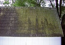 Moss and mildew on roof shingles