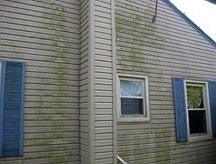 Mold and mildew stains on siding