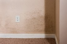 Mold stains on the wall