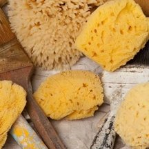 The best tool for paint sponging is a natural sea sponge